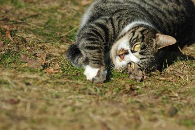 Tierheilung Katze