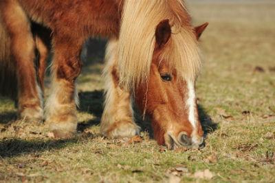Tierheilung Pferd
