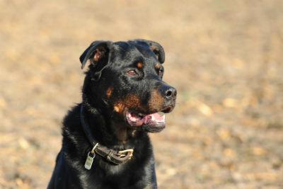 Tierheilung Hund