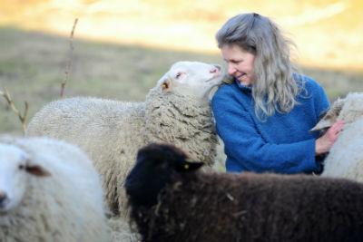 Schafe verstehen