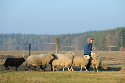 Harmonie in der Herde